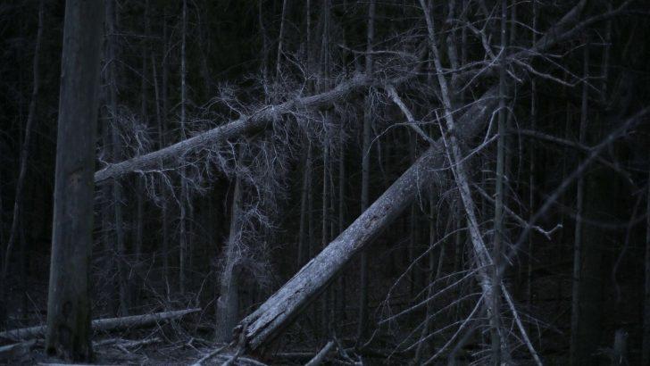 Rūgštus miškas von Rugilė Barzdžiukaitė